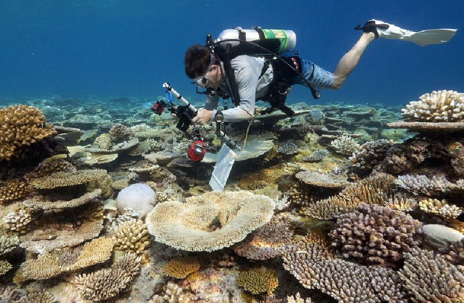 Anantara Hails Successful Coral Protection And
