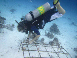 Outrigger Maldives coral regeneration
